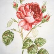 акварель винтажные розы
